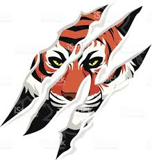tiger claw stock vector more images of aggression