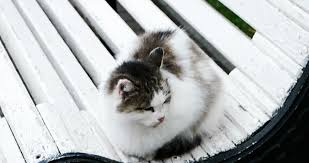 feral street cat sitting on a park bench in cold autumn weather