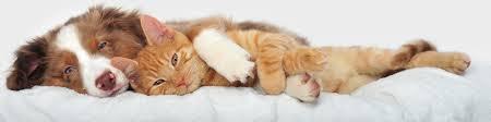 Creature Comforts Pet Sitting Creature Comforts Pet Sitting Pet Sitters Reviews