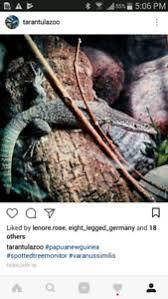 Jegged Monitor Lizard Kijiji In Ontario Buy Sell U0026 Save With