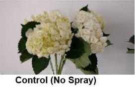 crowning floral spray crowning for longer vase floralife