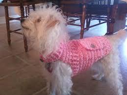 crochet pattern for dog coat 41 best crochet dog sweaters images on pinterest crochet pet