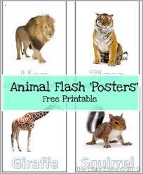 esl flash cards animals kindergarten class kindergarten and animal