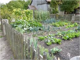 Backyard Vegetable Garden Ideas Backyard Backyard Vegetable Garden Mind Blowing Size