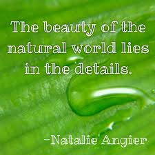20 best autumn wonders images on nature quotes