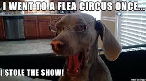 Dog Jokes Meme - stupid dog jokes meme on imgur