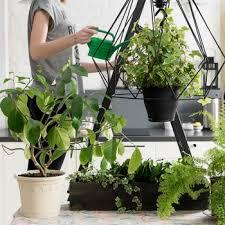 houseplants martha stewart