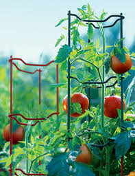 Types Of Patio Tomatoes Tomato Stakes Tomato Cages Tomato Ladders Gardeners Supply