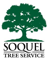 soquel tree service tree removal tree trimming santa tree