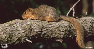 7 cool things you should know about squirrels dnr news releases