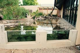 total habitat blog natural swimming pools ponds design