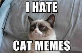 Cats Meme - 10 of the funniest grumpy cat memes