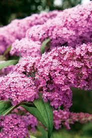 flowers for 21 best plants for pollinators sunset magazine