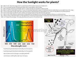 Spectrum Lighting Led Lighting Full Spectrum Led Grow Lights Incredible Energy