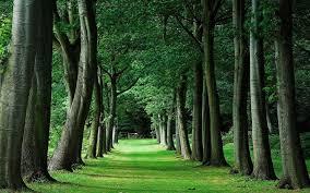 green trees wallpaper wallpup com