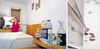 Can Bleach Kill Bed Bugs Does Bleach Kill Bed Bugs Eggs Larvae Clorox To Get Rid Of With