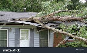 A Small House White Oak Tree Falls On Small Stock Photo 90021889 Shutterstock