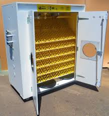 surehatch incubators home of the best egg incubators in the world