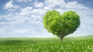 wallpaper love tree green landscape hd 4k love 2366