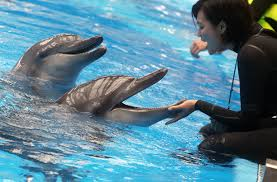 ocean park urged to disclose dolphin deaths after u0027attempted