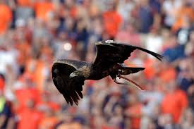 memorial for tiger eagle to fly at auburn set