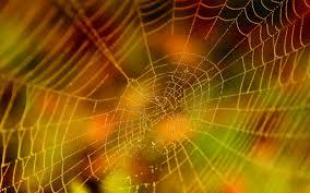 cool spider web wallpaper 6782744
