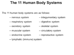 Human Anatomy Integumentary System Human Anatomy And Body Systems Levels Of Organization Remember