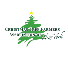 christmas tree farms for hudson valley families kids out and