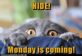 Monday Cat Meme - lolcats monday lol at funny cat memes funny cat pictures