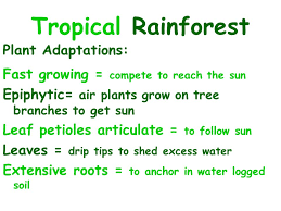 Dominant Plants Of The Tropical Rainforest - dominant plants in tropical rainforest home design inspirations