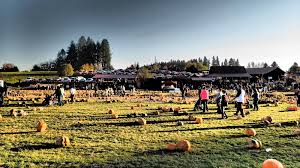 halloween city hillsboro or the zombie hunter a survivalist u0027s journal vacation report