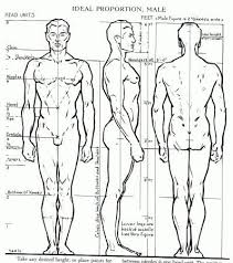 Human Anatomy Reference 12 Best Anatomy Reference Images On Pinterest Drawings Anatomy