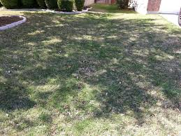 How Much Gravel Do I Need In Yards Please Don U0027t Rock Your Yard Crazy Green Thumbs