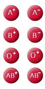 blood type genetics biology tutorvista com