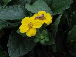 virginia native plant society fall 2016 native plant sales natural arlington