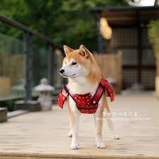 What Breed Is Doge Meme - samurai doge album on imgur