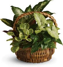 indoor house plants good house plants top 5 indoor plants and how to care for them
