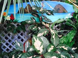 Art In The Garden - sunshine suite romantic 1 bedroom suite alohawaii properties