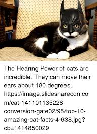 Cat Facts Meme - the hearing power of cats are incredible they can move their ears
