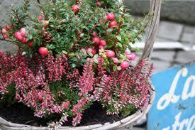 herbstbepflanzung balkon balkon herbst winter artownit for