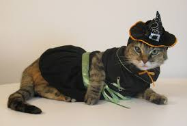 witch costume for cats 2011 u2013 october