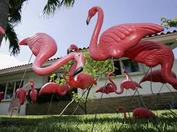 passage the of pink flamingos cbs news