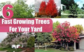 6 fast growing trees for your yard diy home creative