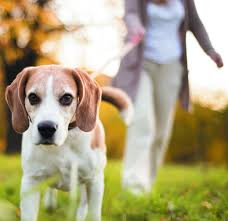 Dog Hair Loss On Back Dogs May Increase Activity Levels In Older Adults Harvard Health