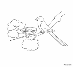 free coloring pages of birds birds coloring pages pitara kids network