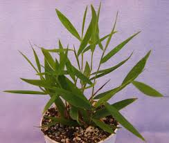 miniature terrarium plants violet barn