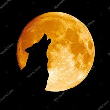 wolf howling at the moon u2014 stock photo sonsam 9394936