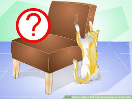 How To Fix Scratched Leather Sofa How To Stop A Cat From Scratching A Leather Sofa 12 Steps