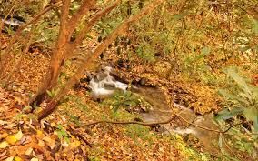thanksgiving dates usa thanksgiving photo gallery image album