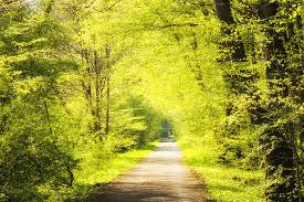 forest path in with bright green trees by matthias hauser